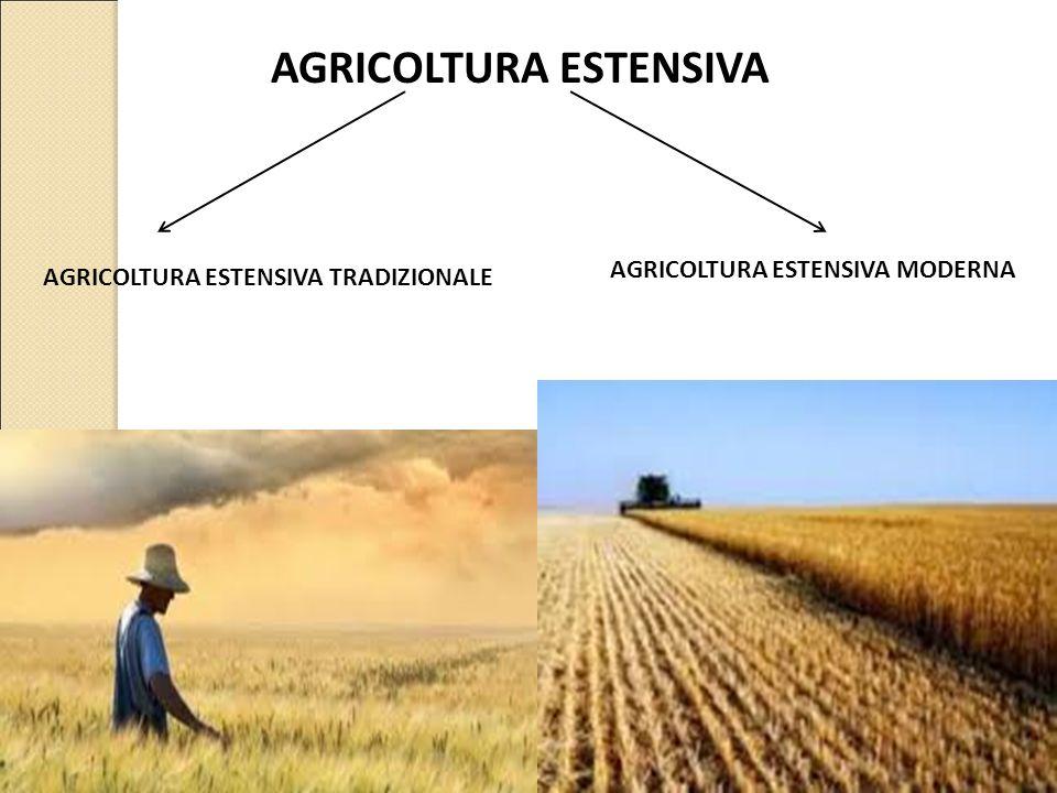 AGRICOLTURA ESTENSIVA AGRICOLTURA ESTENSIVA TRADIZIONALE AGRICOLTURA ESTENSIVA MODERNA