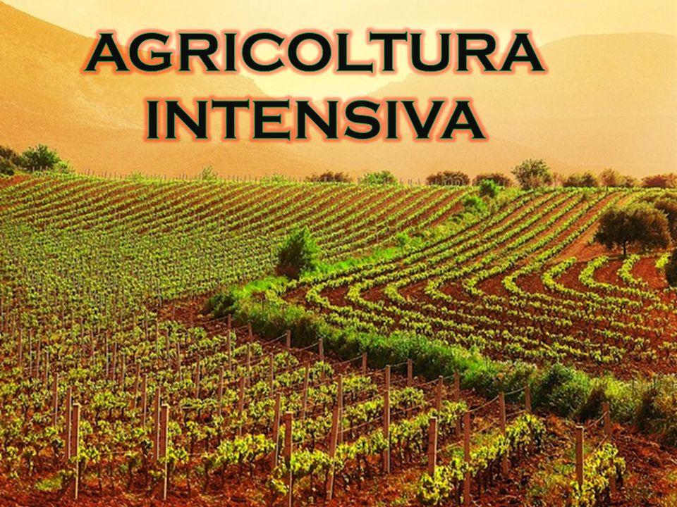 L'agricoltura intensiva mira a sfruttare al massimo la capacità del suolo.