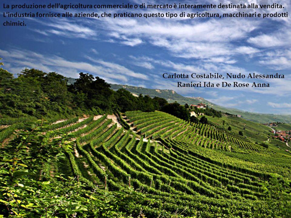 La produzione dell'agricoltura commerciale o di mercato è interamente destinata alla vendita. L'industria fornisce alle aziende, che praticano questo