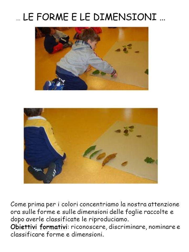 … LE FORME E LE DIMENSIONI … Come prima per i colori concentriamo la nostra attenzione ora sulle forme e sulle dimensioni delle foglie raccolte e dopo averle classificate le riproduciamo.