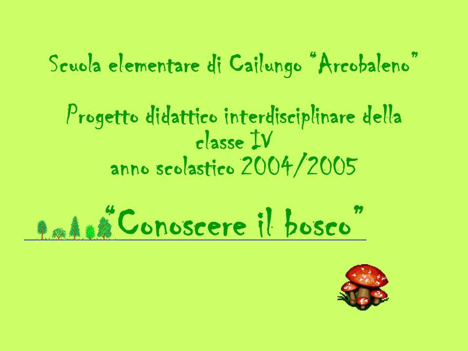 Scuola elementare di Cailungo Arcobaleno Progetto didattico interdisciplinare della classe IV anno scolastico 2004/2005 Conoscere il bosco