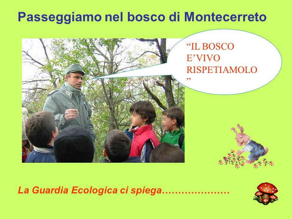 Passeggiamo nel bosco di Montecerreto La Guardia Ecologica ci spiega………………… IL BOSCO E'VIVO RISPETIAMOLO
