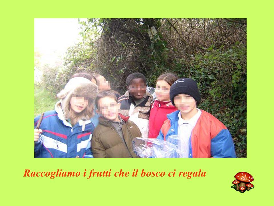 Raccogliamo i frutti che il bosco ci regala