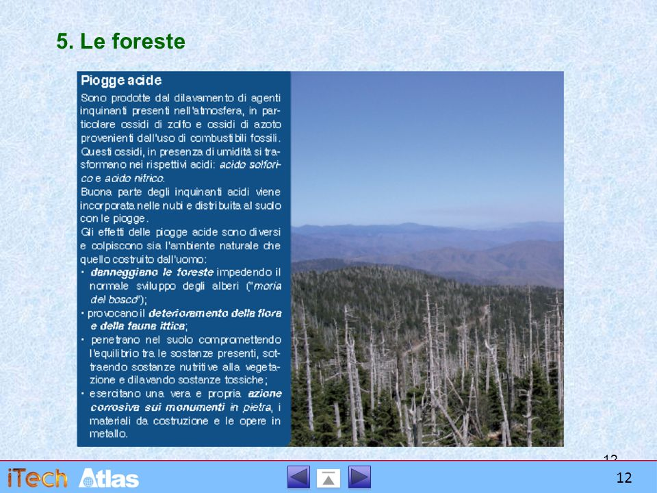 12 5. Le foreste 12