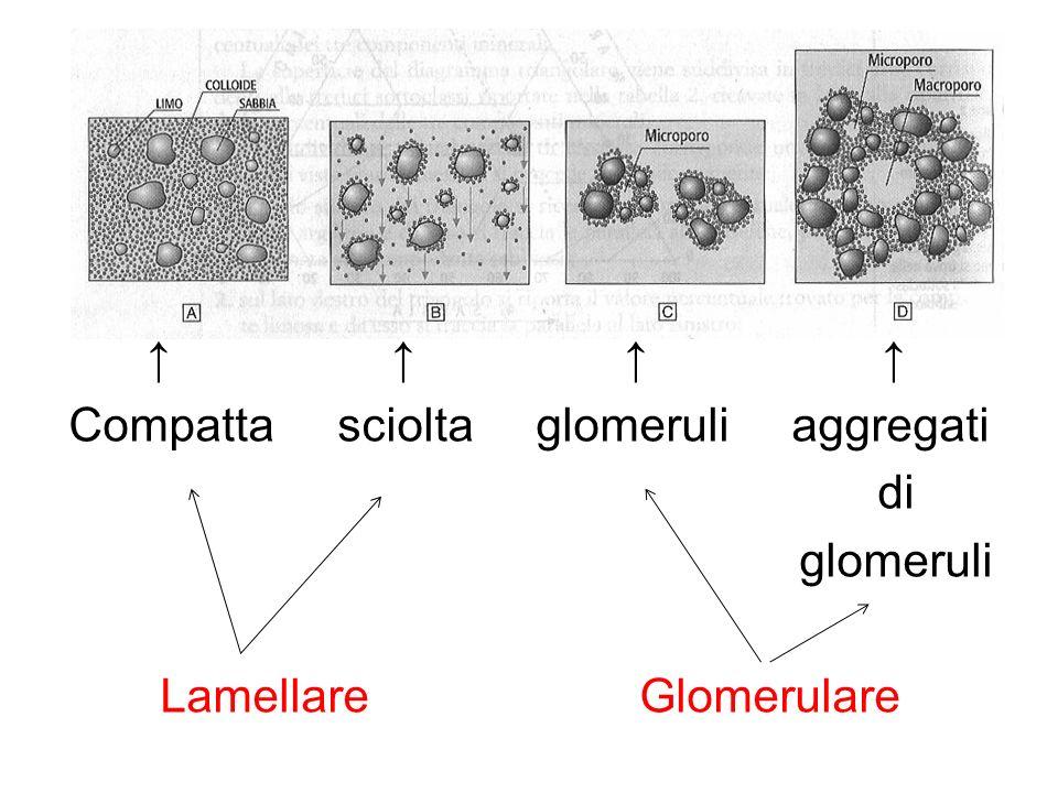 ↑ ↑ ↑ ↑ Compatta sciolta glomeruli aggregati di glomeruli Lamellare Glomerulare