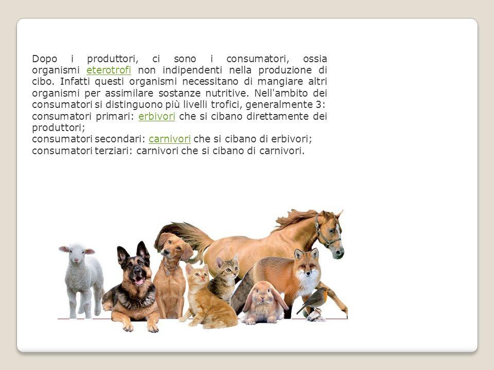 Dopo i produttori, ci sono i consumatori, ossia organismi eterotrofi non indipendenti nella produzione di cibo.