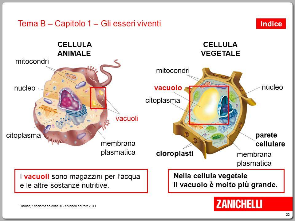 22 Tibone, Facciamo scienze © Zanichelli editore 2011 Tema B – Capitolo 1 – Gli esseri viventi mitocondri vacuoli membrana plasmatica nucleo citoplasm