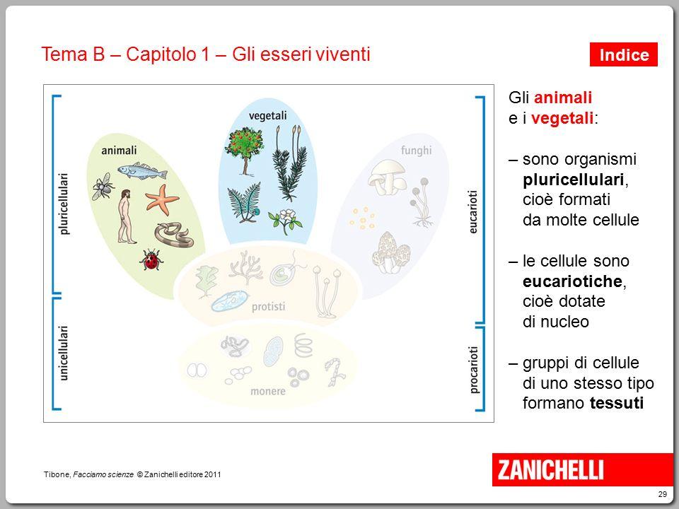 29 Tibone, Facciamo scienze © Zanichelli editore 2011 Tema B – Capitolo 1 – Gli esseri viventi Gli animali e i vegetali: – sono organismi pluricellula