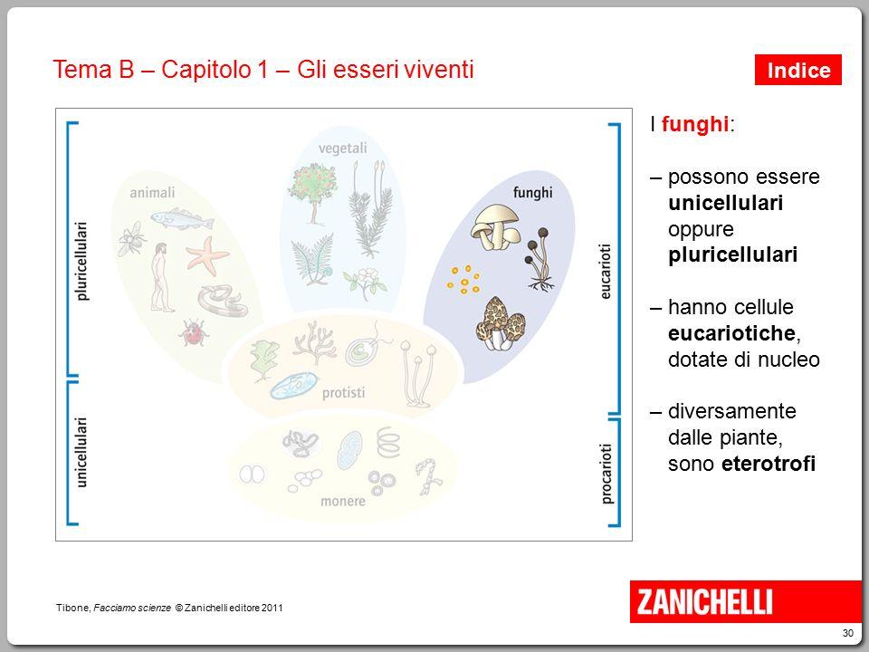 30 Tibone, Facciamo scienze © Zanichelli editore 2011 Tema B – Capitolo 1 – Gli esseri viventi I funghi: – possono essere unicellulari oppure pluricel