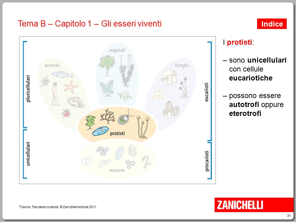 31 Tibone, Facciamo scienze © Zanichelli editore 2011 Tema B – Capitolo 1 – Gli esseri viventi I protisti: – sono unicellulari con cellule eucariotich
