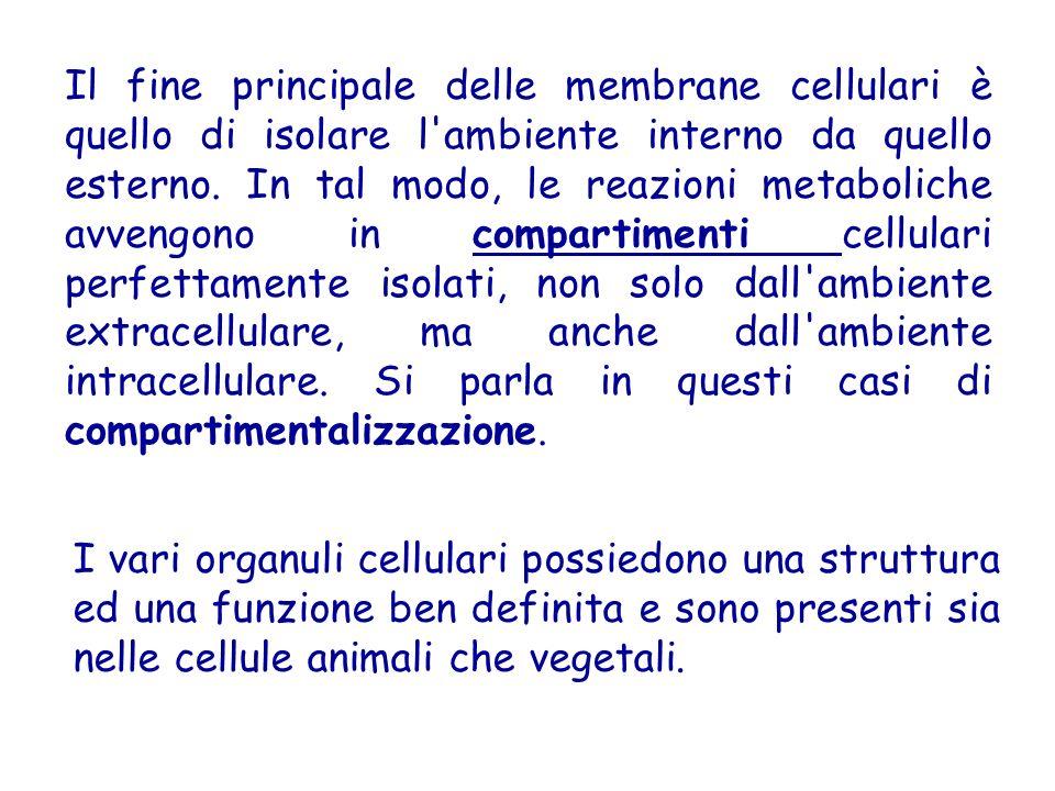 Il fine principale delle membrane cellulari è quello di isolare l ambiente interno da quello esterno.