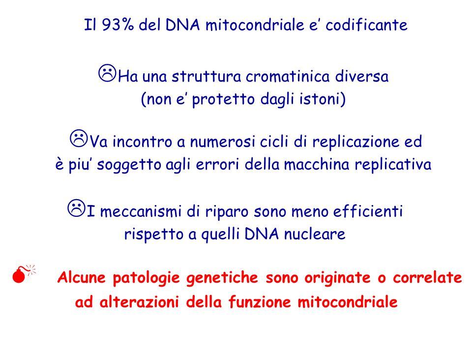  Ha una struttura cromatinica diversa (non e' protetto dagli istoni) Il 93% del DNA mitocondriale e' codificante  Va incontro a numerosi cicli di replicazione ed è piu' soggetto agli errori della macchina replicativa  I meccanismi di riparo sono meno efficienti rispetto a quelli DNA nucleare  Alcune patologie genetiche sono originate o correlate ad alterazioni della funzione mitocondriale