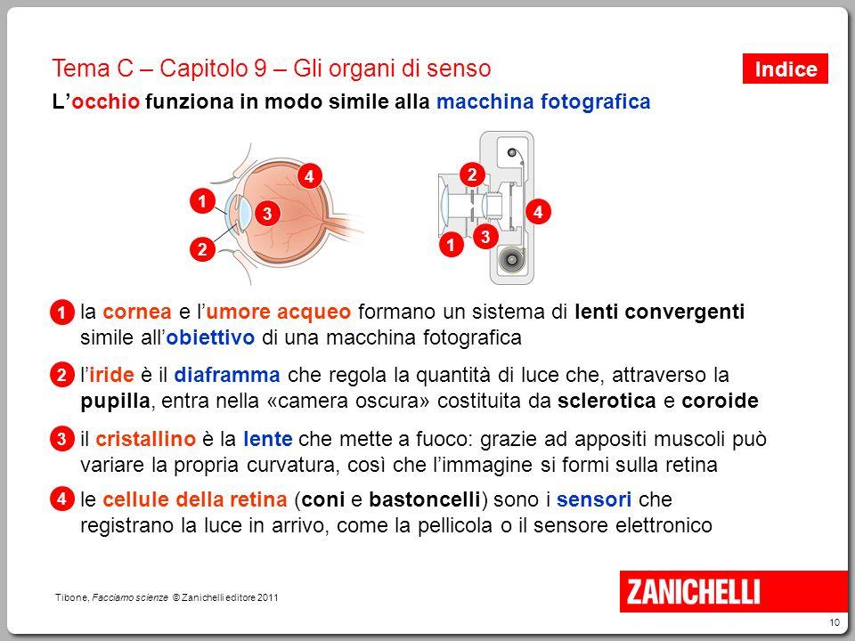 10 Tibone, Facciamo scienze © Zanichelli editore 2011 Tema C – Capitolo 9 – Gli organi di senso L'occhio funziona in modo simile alla macchina fotogra