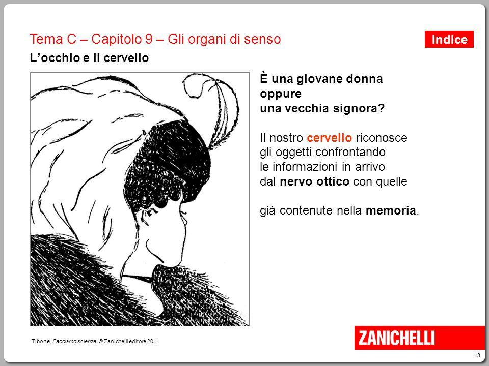 13 Tibone, Facciamo scienze © Zanichelli editore 2011 Tema C – Capitolo 9 – Gli organi di senso L'occhio e il cervello È una giovane donna oppure una