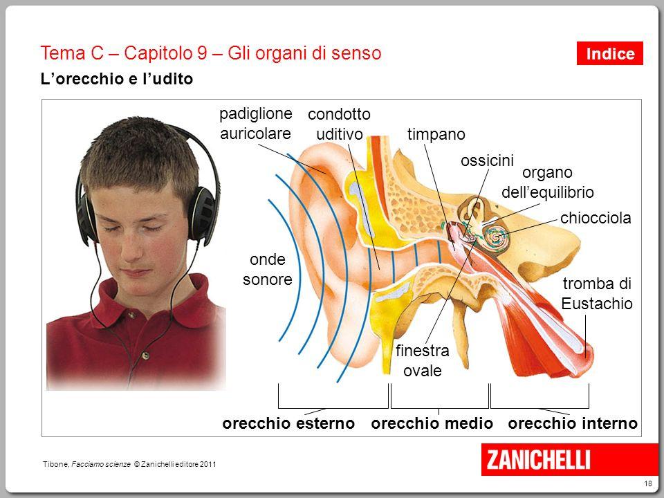 18 Tibone, Facciamo scienze © Zanichelli editore 2011 Tema C – Capitolo 9 – Gli organi di senso L'orecchio e l'udito onde sonore padiglione auricolare