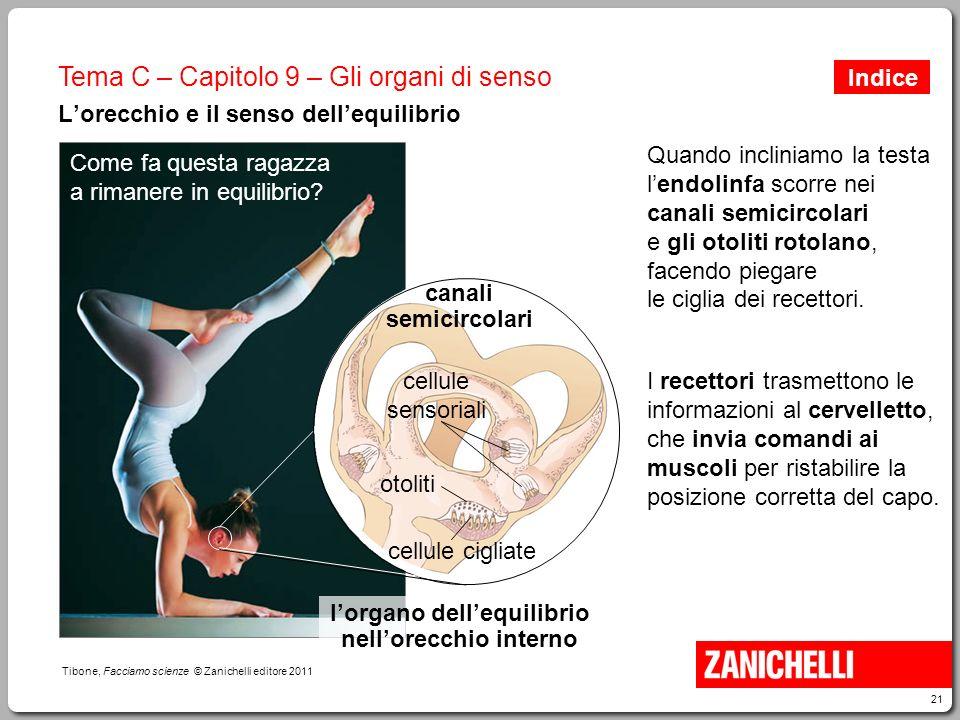 21 Tibone, Facciamo scienze © Zanichelli editore 2011 Tema C – Capitolo 9 – Gli organi di senso L'orecchio e il senso dell'equilibrio Come fa questa r