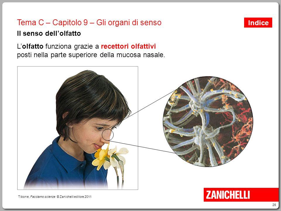 26 Tibone, Facciamo scienze © Zanichelli editore 2011 Tema C – Capitolo 9 – Gli organi di senso Il senso dell'olfatto L'olfatto funziona grazie a rece