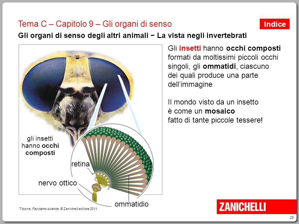 29 Tibone, Facciamo scienze © Zanichelli editore 2011 Tema C – Capitolo 9 – Gli organi di senso Gli organi di senso degli altri animali − La vista neg