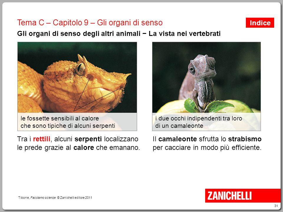 31 Tibone, Facciamo scienze © Zanichelli editore 2011 Tema C – Capitolo 9 – Gli organi di senso Gli organi di senso degli altri animali − La vista nei