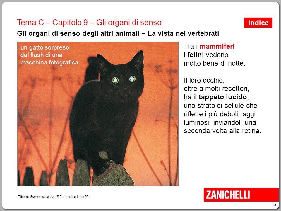 33 Tibone, Facciamo scienze © Zanichelli editore 2011 Tema C – Capitolo 9 – Gli organi di senso Gli organi di senso degli altri animali − La vista nei
