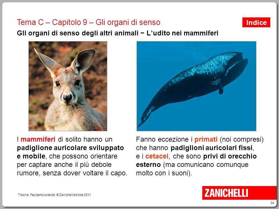 34 Tibone, Facciamo scienze © Zanichelli editore 2011 Tema C – Capitolo 9 – Gli organi di senso Gli organi di senso degli altri animali − L'udito nei