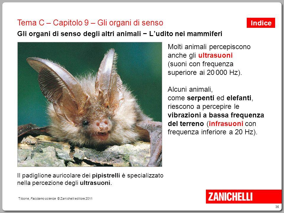 35 Tibone, Facciamo scienze © Zanichelli editore 2011 Tema C – Capitolo 9 – Gli organi di senso Gli organi di senso degli altri animali − L'udito nei