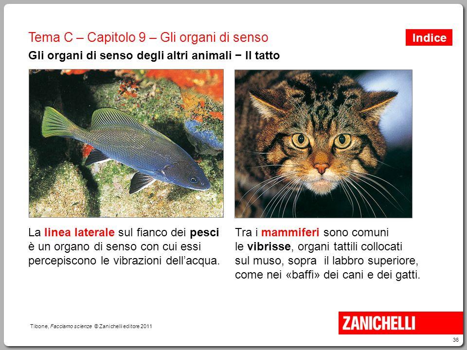 36 Tibone, Facciamo scienze © Zanichelli editore 2011 Tema C – Capitolo 9 – Gli organi di senso Gli organi di senso degli altri animali − Il tatto La