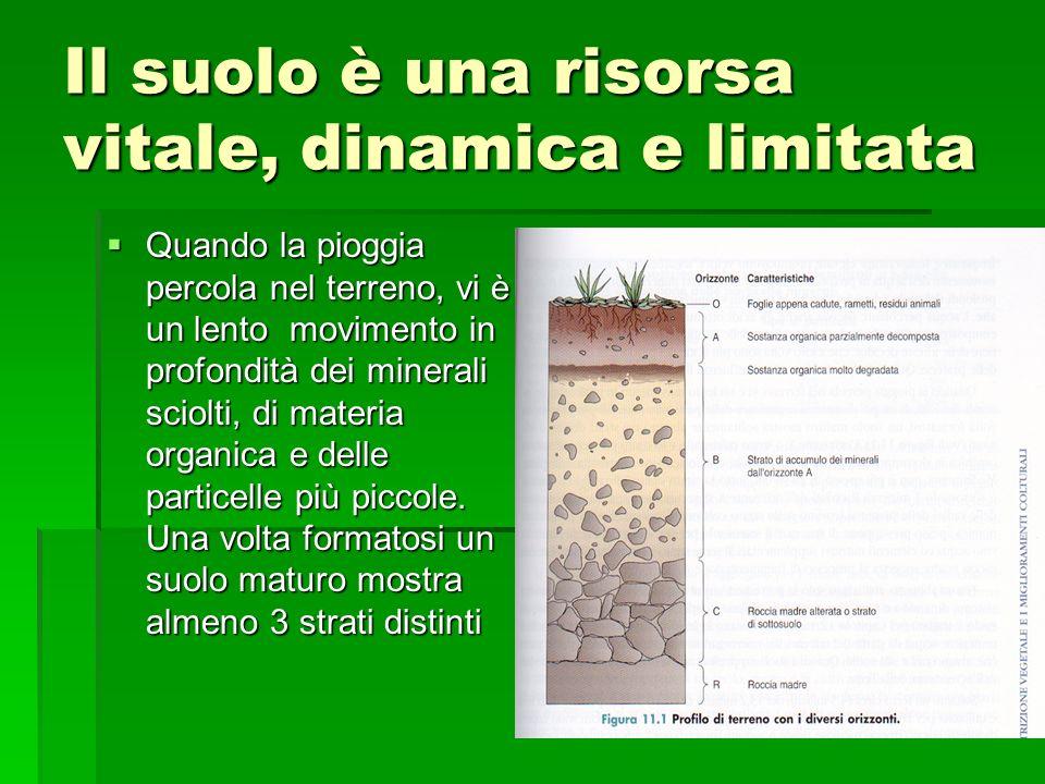 Il suolo è una risorsa vitale, dinamica e limitata  Quando la pioggia percola nel terreno, vi è un lento movimento in profondità dei minerali sciolti, di materia organica e delle particelle più piccole.