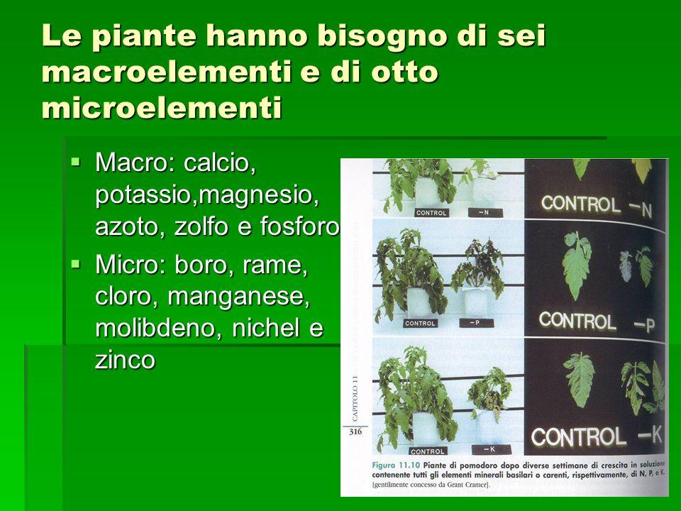 Le piante hanno bisogno di sei macroelementi e di otto microelementi  Macro: calcio, potassio,magnesio, azoto, zolfo e fosforo  Micro: boro, rame, cloro, manganese, molibdeno, nichel e zinco