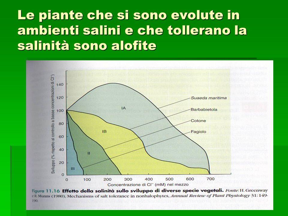 Le piante che si sono evolute in ambienti salini e che tollerano la salinità sono alofite