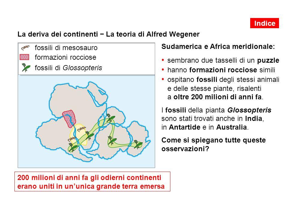 La deriva dei continenti − La teoria di Alfred Wegener Sudamerica e Africa meridionale: sembrano due tasselli di un puzzle hanno formazioni rocciose simili ospitano fossili degli stessi animali e delle stesse piante, risalenti a oltre 200 milioni di anni fa.
