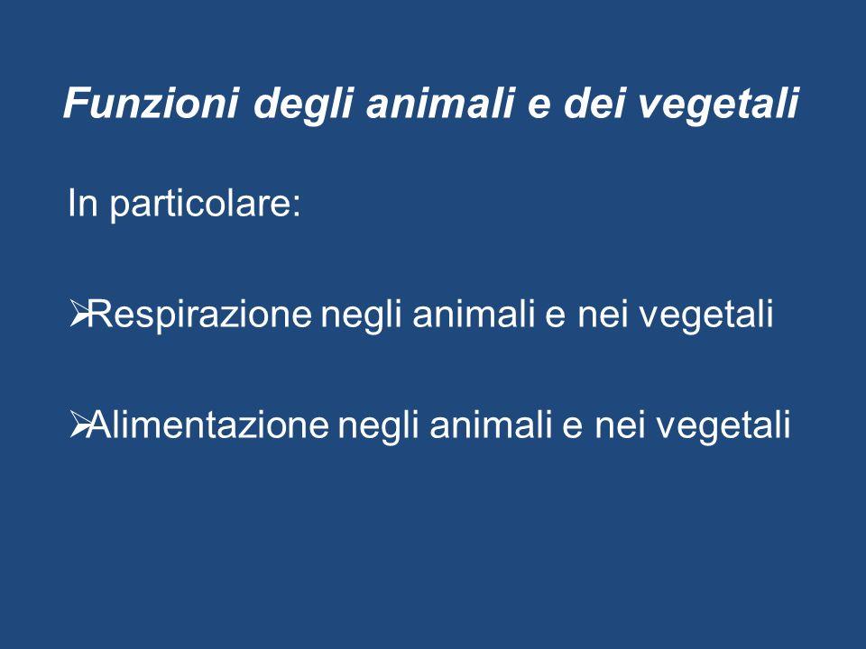 Funzioni degli animali e dei vegetali In particolare:  Respirazione negli animali e nei vegetali  Alimentazione negli animali e nei vegetali