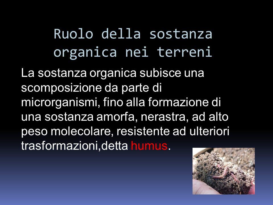Ruolo della sostanza organica nei terreni La sostanza organica subisce una scomposizione da parte di microrganismi, fino alla formazione di una sostan