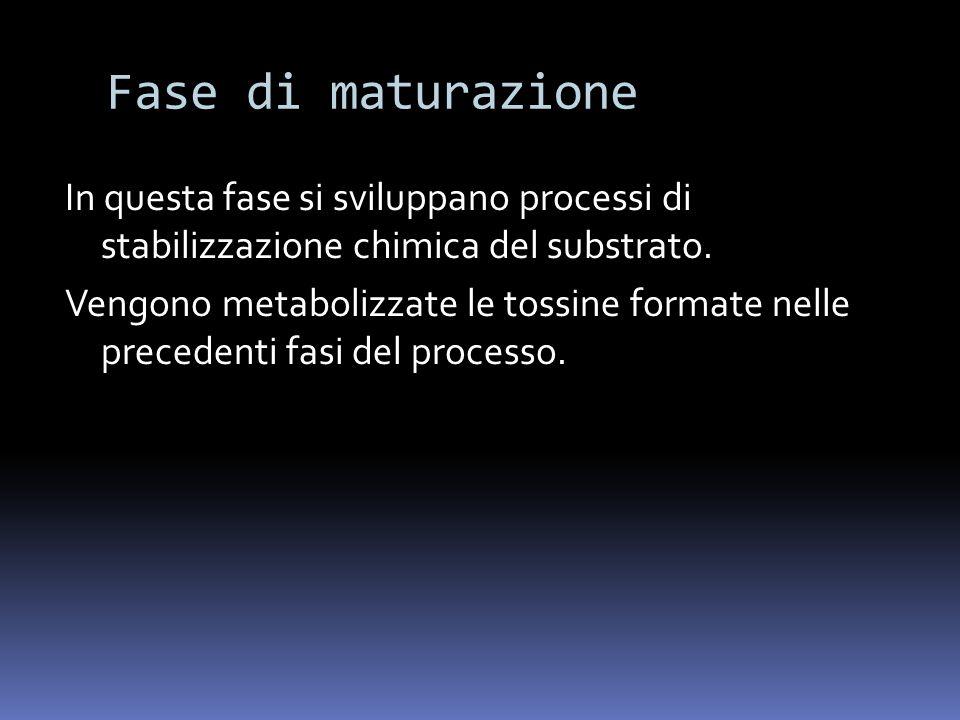 Fase di maturazione In questa fase si sviluppano processi di stabilizzazione chimica del substrato. Vengono metabolizzate le tossine formate nelle pre
