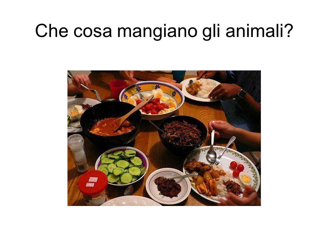 Che cosa mangiano gli animali