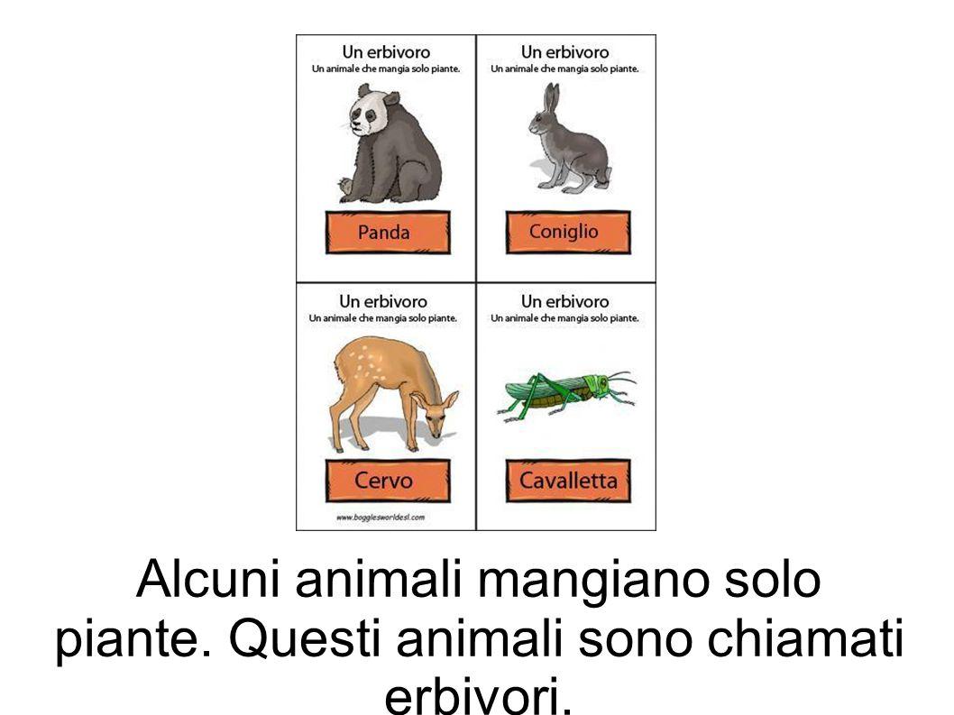 Alcuni animali mangiano solo piante. Questi animali sono chiamati erbivori.