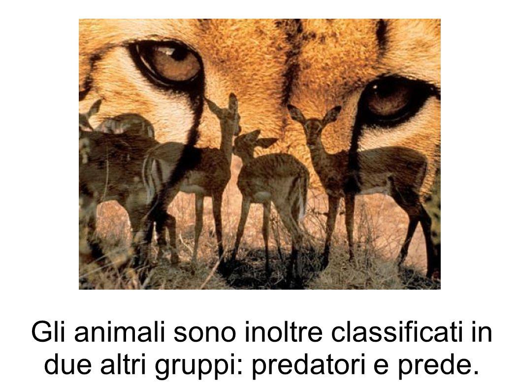 Gli animali sono inoltre classificati in due altri gruppi: predatori e prede.