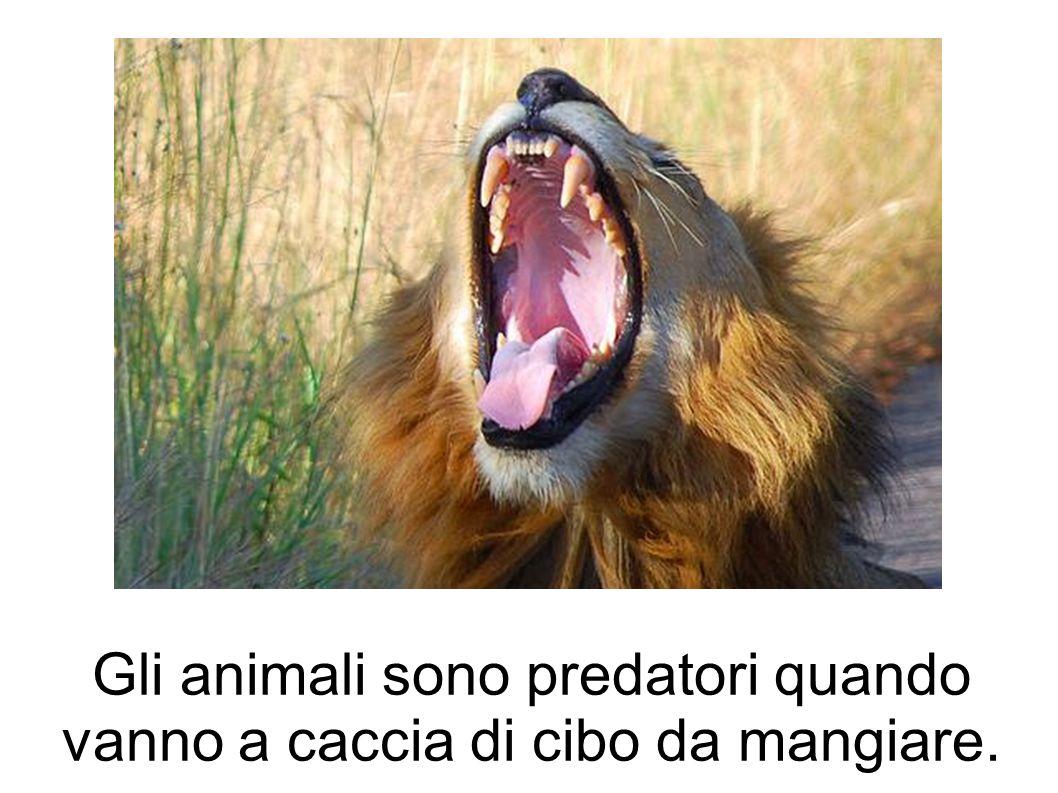Gli animali sono predatori quando vanno a caccia di cibo da mangiare.