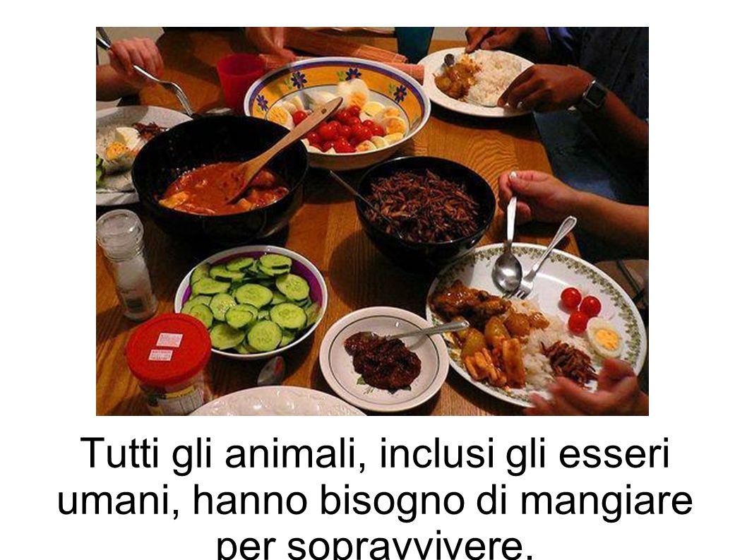 Tutti gli animali, inclusi gli esseri umani, hanno bisogno di mangiare per sopravvivere.