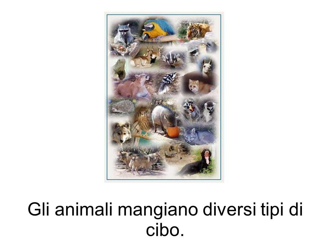 Gli animali mangiano diversi tipi di cibo.