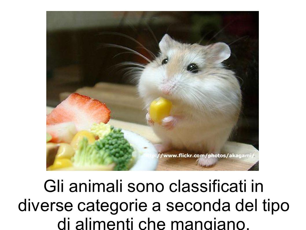 Gli animali sono classificati in diverse categorie a seconda del tipo di alimenti che mangiano.