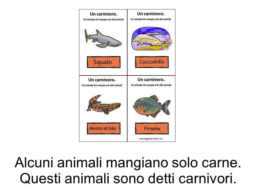 Alcuni animali mangiano solo carne. Questi animali sono detti carnivori.