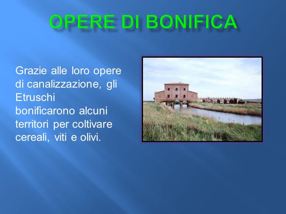 Grazie alle loro opere di canalizzazione, gli Etruschi bonificarono alcuni territori per coltivare cereali, viti e olivi.