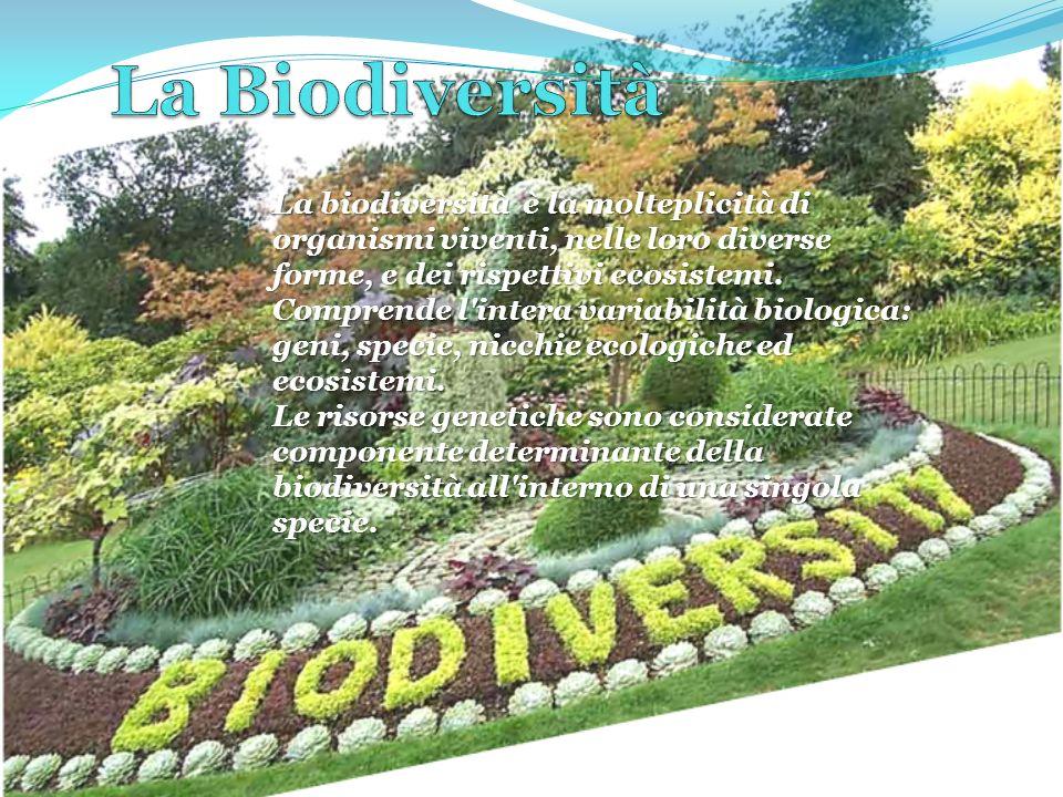 La biodiversità, termine usato per indicare la diversità biologica, formato dai termini bios (vita) e diversità.