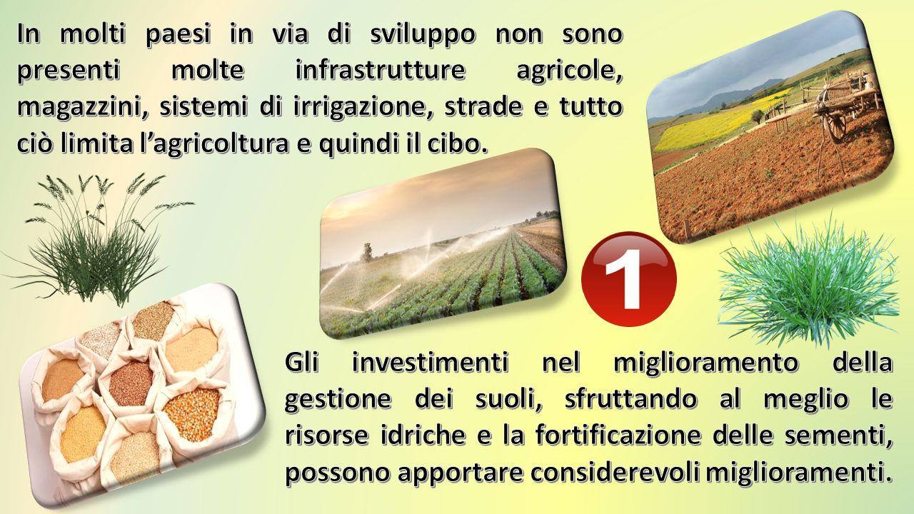 Mancanza di investimenti in agricoltura Clima e meteo Guerre e sradicamento Spreco alimentare