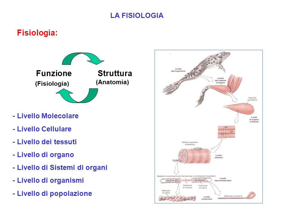 LA FISIOLOGIA Fisiologia: Studio delle funzioni vitali a vari livelli di complessità Funzione (Fisiologia) Struttura (Anatomia) - Livello Molecolare - Livello Cellulare - Livello dei tessuti - Livello di organo - Livello di Sistemi di organi - Livello di organismi - Livello di popolazione