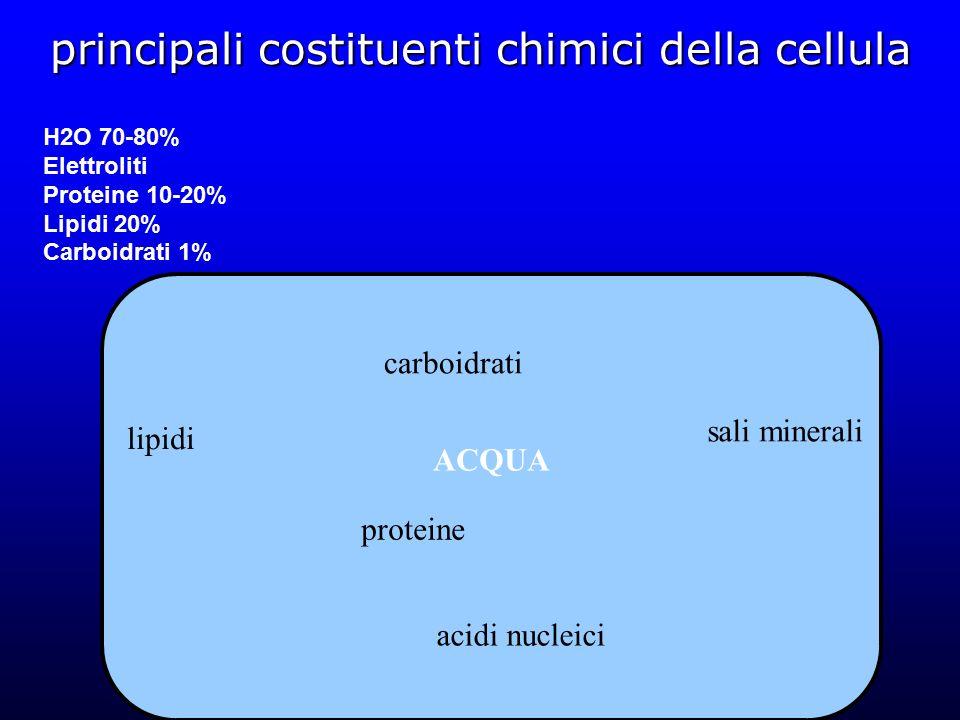 principali costituenti chimici della cellula carboidrati lipidi sali minerali proteine acidi nucleici ACQUA H2O 70-80% Elettroliti Proteine 10-20% Lipidi 20% Carboidrati 1%