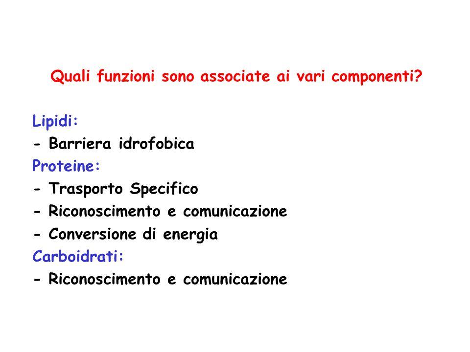 Quali funzioni sono associate ai vari componenti.