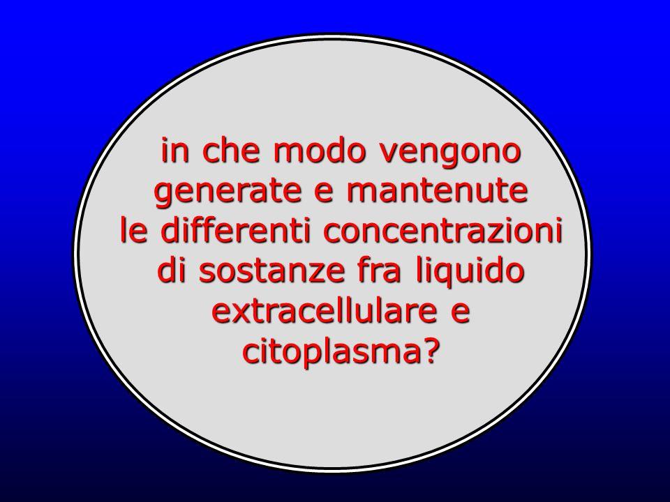 in che modo vengono generate e mantenute le differenti concentrazioni di sostanze fra liquido extracellulare e citoplasma?