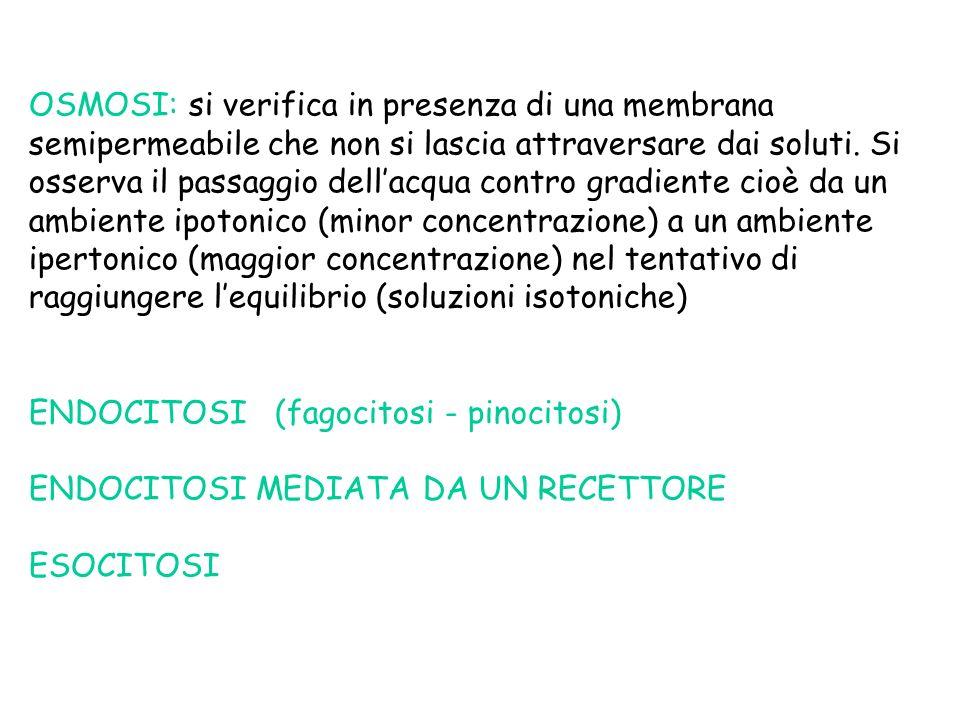 OSMOSI: si verifica in presenza di una membrana semipermeabile che non si lascia attraversare dai soluti.